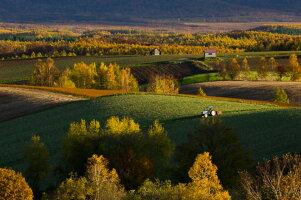 【ふるさと納税】[072-02]写真家中西敏貴額付き写真「秋色の丘」(サイン入り)