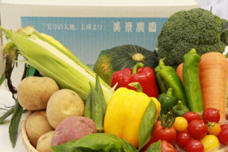 【ふるさと納税】美景農園季節の野菜詰合せ