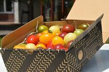 【ふるさと納税】カラフルトマト