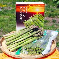 【ふるさと納税】北海道オロロングリーンアスパラガス1.5kg