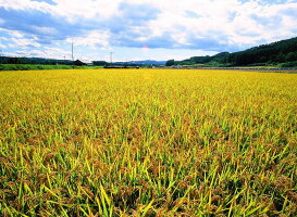 今井農場あっぱれもち米10kg(精米)