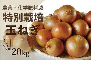 【ふるさと納税】JAつべつ特別栽培玉ねぎ20kg