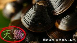 【ふるさと納税】網走湖産天然大和しじみ1.5kg