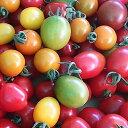 【ふるさと納税】<2021年7月上旬よりお届け>北海道壮瞥産 大作農園のカラフルミニトマト約2kg 【野菜・ミニトマト・野菜・トマト】 お届け:2021年7月上旬〜9月下旬頃まで
