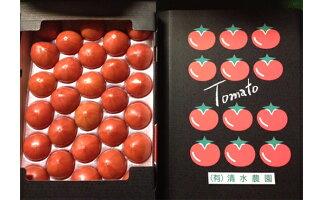 【ふるさと納税】<2022年6月下旬よりお届け>北海道壮瞥産こだわりフルーツトマト20玉以上【野菜・トマト】お届け:2022年6月下旬〜8月中旬まで