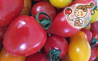 【ふるさと納税】<2020年6月下旬よりお届け>北海道壮瞥産彩りミニトマト約3kg【野菜・ミニトマト】お届け:2020年6月下旬〜7月末頃まで