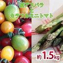 【ふるさと納税】<2021年7月上旬よりお届け>北海道壮瞥町産 大作農園「夏アスパラとカラフルミニトマト」のセット約1.5kg 【アスパラガス・野菜・ミニトマト・詰合せ・アスパラ・カラフルミニトマト】 お届け:2021年7月上旬〜9月下旬まで