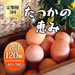 【ふるさと納税】平飼い有精卵『たつかの恵み』40個×3ヶ月連続お届け  【定期便・卵】