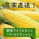 【ふるさと納税】《先行予約》北海道厚真産とうもろこし『ゴールドラッシュ』 数量限定!