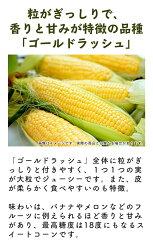 【ふるさと納税】《先行予約》北海道厚真産とうもろこし『ゴールドラッシュ』 数量限定! 画像2