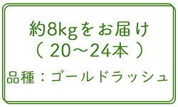 【ふるさと納税】《先行予約》北海道厚真産とうもろこし『ゴールドラッシュ』 数量限定! 画像1