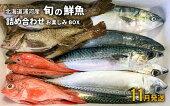 【ふるさと納税】漁協厳選!鮮魚お楽しみBOX