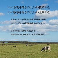 【ふるさと納税】ハーゲンダッツセット