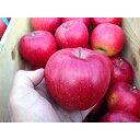 【ふるさと納税】りんご「シナノスイート」10kg(家庭用)_A20【1073684】