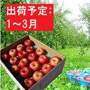 【ふるさと納税】年明け 訳あり 季節の家庭用りんご約5kg(品種おまかせ)青森県特別栽培農産物【弘前市産・青森りんご】 【果物類・林檎・りんご・リンゴ】 お届け:2021年1月8日〜2021年3月31日