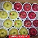 【ふるさと納税】年明け 贈答用 百年木の香 サンふじ&王林約5kg 有機肥料100% 【弘前市産・青森りんご】 【果物類・林檎・りんご・リンゴ】 お届け:2021年1月6日〜2021年4月10日