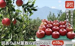 【ふるさと納税】3月 訳あり EM葉取らずサンふじ約10kg 糖度13度以上【弘前市産・青森りんご】 【果物類・林檎・りんご・リンゴ・サンふじ・約10kg・訳あり】 お届け:2021年3月1日〜2021年3月20日・・・ 画像1