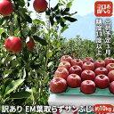 【ふるさと納税】3月 訳あり EM葉取らずサンふじ約10kg 糖度13度以上【弘前市産・青森りんご】 【果物類・林檎・りんご・リンゴ・サンふじ・約10kg・訳あり】 お届け:2021年3月1日〜2021年3月20日・・・