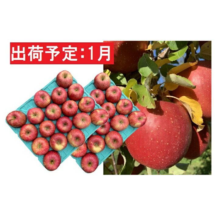 【ふるさと納税】1月 美味!訳あり葉とらずサンふじ約10kg【弘前市産・青森りんご】 【果物類・林檎・りんご・リンゴ】 お届け:2021年1月5日~2021年1月31日
