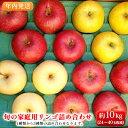【ふるさと納税】【年内発送】旬の家庭用リンゴ詰め合わせ約10