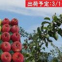 【ふるさと納税】3月 贈答用 津軽のおまかせりんご約5kg