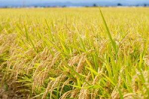 【ふるさと納税】【3ヶ月】一等米つがるロマン5kg(精米)青森県産【定期便】【定期便・お米】