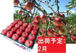 【ふるさと納税】りんご 青森産 約5kg 丸福 サンふじ 光センサー選果 糖度 12度以上【2月発送】 【果物類・林檎・りんご・リンゴ】 お届け:2021年2月1日〜2021年2月28日・・・ 画像1