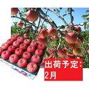 【ふるさと納税】りんご 青森産 約5kg 丸福 サンふじ 光センサー選果 糖度 12度以上【2月発送】 【果物類・林檎・りんご・リンゴ】 お届け:2021年2月1日〜2021年2月28日・・・