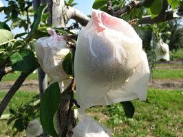 【ふるさと納税】6月冷た〜い最高等級「特選」ふじりんご約3kg【青森りんご・有袋栽培・CA貯蔵・クール便】【果物類・林檎・りんご・リンゴ】お届け:2021年6月1日〜2021年6月30日