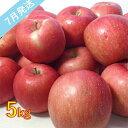 【ふるさと納税】【訳あり】 7月 りんご 5kg程度 青森産 有袋ふじ 【果物類・林檎・りんご・リンゴ・約5kg・訳あり】 お届け:2021年7月1日〜2021年7月20日