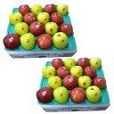 りんご 詰め合わせ 10kg [0059]
