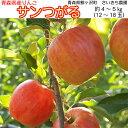 【ふるさと納税】[青森県産りんご]さいきち農園のサンつがる約4〜5kg(12〜18玉) 【果物類・林檎・りんご・リンゴ・フルーツ】 お届け:2021年9月5日〜9月15日