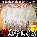 【ふるさと納税】青森県鰺ヶ沢町 生干しイカ 5枚セット ※お申込みから3〜6ヶ月以内の発送になります。