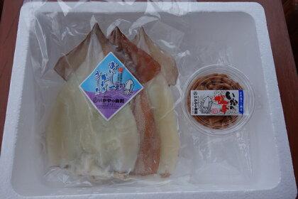 青森県鰺ヶ沢町 生干しイカ(3枚組)と塩辛セット