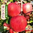 【ふるさと納税】青森県産りんご サンふじ 家庭用 約5kg【1110657】