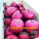 【ふるさと納税】青森県産りんご サンふじ 家庭用 約10kg【1110662】