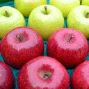 【ふるさと納税】三戸りんご サンふじ&星の金貨 計18玉 約5kg 【H29.11月下旬発送開始】