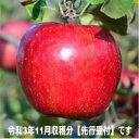 【ふるさと納税】★★2021年11月収穫分【先行予約分】です