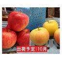 【ふるさと納税】10月 田子の早生ふじ・トキの詰合せ 約10kg ご家庭用【訳あり】向井邦雄さん生産直送 【果物類・林檎・りんご・リンゴ】 お届け:2021年10月15日〜2021年10月25日