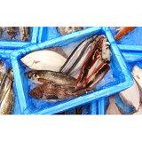 【ふるさと納税】大船渡 旬の鮮魚便!! 【魚介類・魚貝類・加工食品・鮮魚】