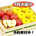 【ふるさと納税】岩手県花巻産 イーハトーヴ訳ありりんご5kg...