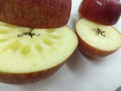 【ふるさと納税】《先行予約》イーハトーヴ 訳あり 家庭用 りんご 5kg セット 岩手県花巻産 画像1