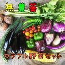 ひばり農園の無農薬カラフル野菜セット