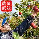 【ふるさと納税】農家から届く 蔵出しりんご10kg(家庭用)