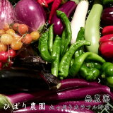 【ふるさと納税】ひばり農園たっぷり無農薬カラフル野菜《予約受付中》※8月より順次発送予定