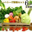 《定期便6ヶ月コース》イーハトーヴ野菜セット