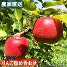【ふるさと納税】花巻産お楽しみりんご詰め合わせ約5kg(15〜20玉)<予約受付>