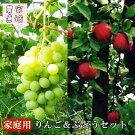 秋の味覚満喫セット《旬のりんごとぶどうセット》数量限定・予約受付
