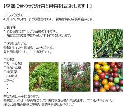 【ふるさと納税】《定期便3ヶ月》イーハトーヴ野菜セット お楽しみ 詰め合わせ 3回(7〜10品)旬 野菜 冷蔵 画像2