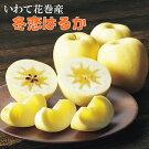 岩手が生んだ究極のりんご『冬恋はるか』2.5kg《数量・季節限定》